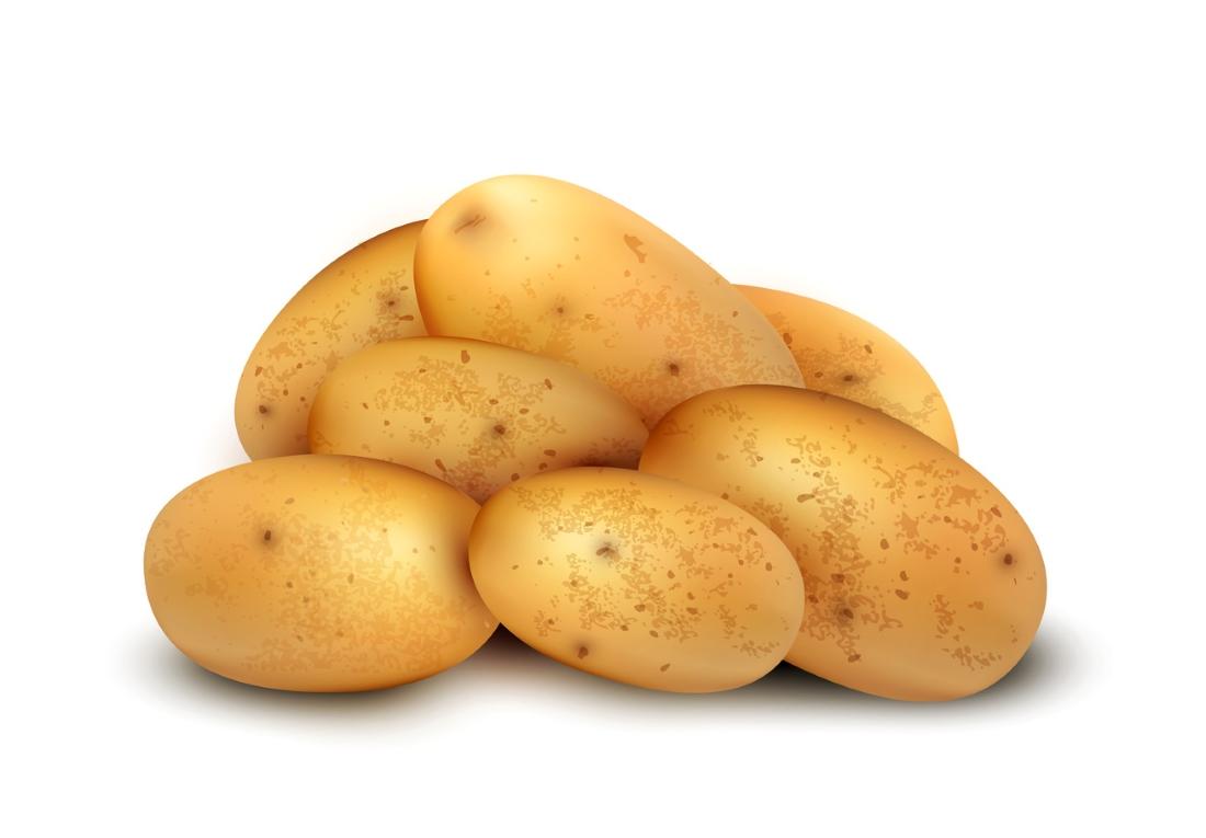распечатать картофель картинку