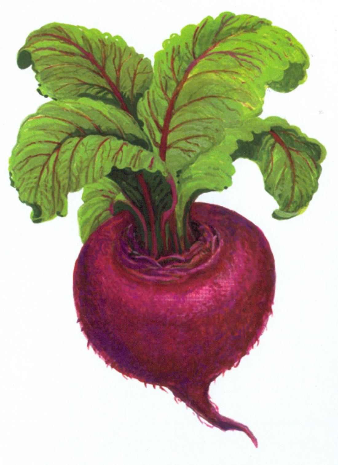 Фото фрукты для детей цветные