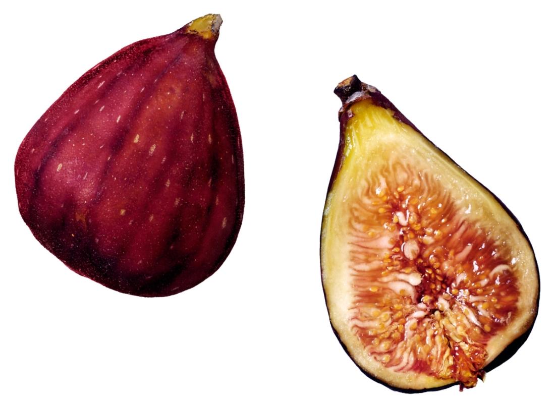 фото плода инжира