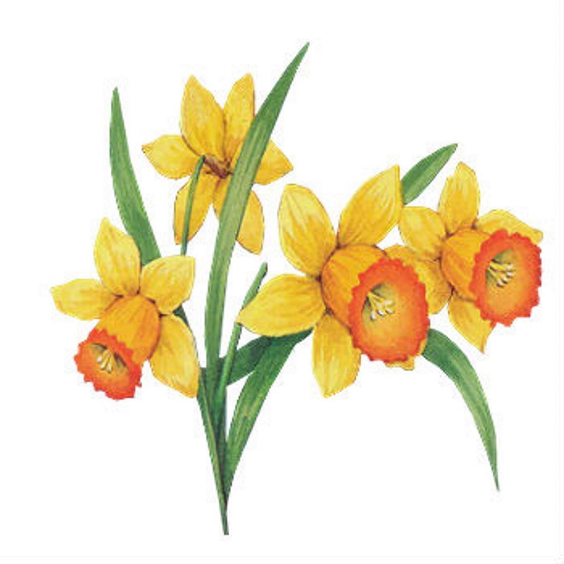 Нарцисс картинка для детей